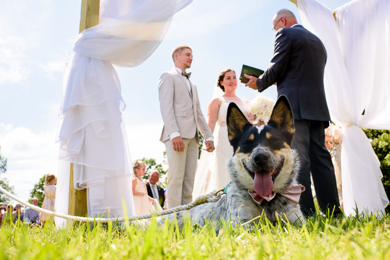 wisconsin Wedding photography dogs
