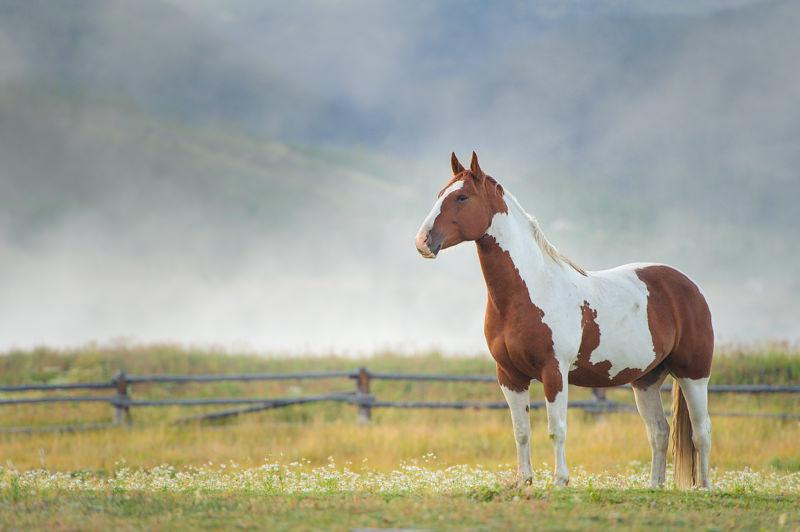devils thumb ranch horse at sunrise